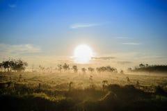 Solen av morgonen Royaltyfria Foton