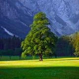 Solen badade trädet Arkivfoto