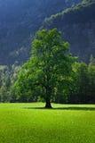 Solen badade trädet Arkivbild