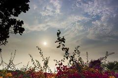 Solen bak blommorna Arkivbild