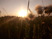 Solen blommar natursolnedgånglandskap Arkivbilder