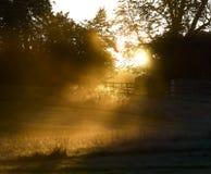 Solen bryter till och med träd i ett disigt vinterfält Arkivfoton