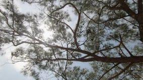 Solen exponerar blasten, och filialer av det härligt sörjer träd i parkerar stock video