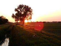 Solen exponerar fröt av fjädern Arkivfoto