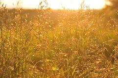 Solen exponerar högväxt gräs Royaltyfri Foto