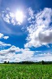 Solen i den blåa himlen för mitt- dag och det gröna fältet Royaltyfria Bilder