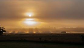 Solen kommer upp till och med dimma royaltyfri foto