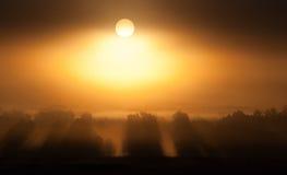 Solen kommer upp till och med dimma royaltyfri fotografi