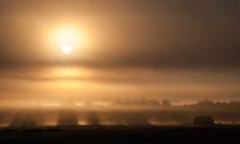 Solen kommer upp till och med dimma royaltyfria foton