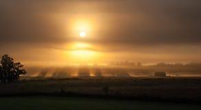Solen kommer upp till och med dimma royaltyfria bilder