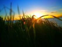 Solen ligger ner under gräset Arkivbilder