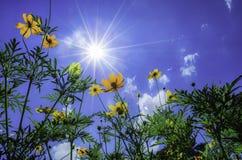 Solen och blomman Fotografering för Bildbyråer