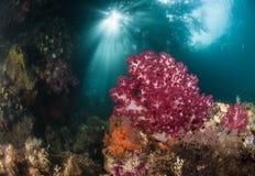 Solen och korallen Arkivfoton