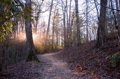 Solen rays att kika till och med träd i skogsolnedgång arkivbild