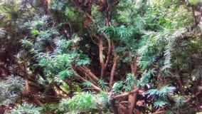 Solen rays att skina på en Bush i morgonen fotografering för bildbyråer