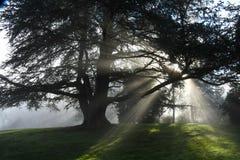 Solen rays att skina till och med träd i Redmond, WA parkerar royaltyfri bild
