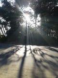 Solen rays morgon Arkivbilder
