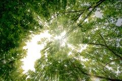 Solen rays, sommar, lövfällande träd för gräsplan arkivbilder