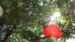 Solen rays till och med filialerna av ett träd stock video