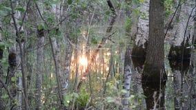 Solen reflekterar vattenskogen