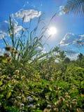 solen skiner ljus blå himmel royaltyfria foton