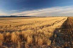 Solen skiner ljust på ett fält i de höga slättarna av Colorado Fotografering för Bildbyråer