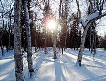 Solen skiner till och med träden som gjuter härliga skuggor arkivbild