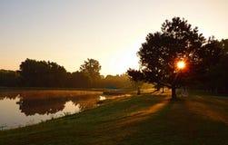Solen som skiner till och med ett träd på, parkerar fotografering för bildbyråer
