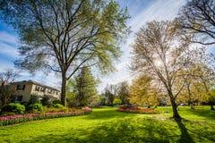 Solen som skiner till och med träd på Sherwood Gardens Park, i Balti arkivbild