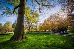 Solen som skiner till och med träd på Sherwood Gardens Park, i Balti fotografering för bildbyråer