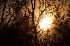Solen ställer in Royaltyfria Bilder