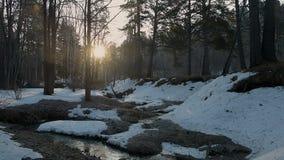 Solen stiger p? v?ren skogen lager videofilmer