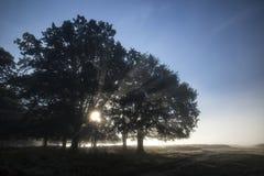 Solen strålar att skina till och med träd i skog på dimmiga Autumn Fall s Royaltyfria Foton