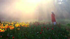 solen till och med skogen Fotografering för Bildbyråer