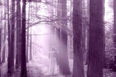 solen till och med skogen royaltyfria bilder