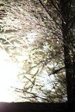 Solen tränger igenom till och med skogen Arkivbild