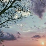 Solenny drzewo fotografia stock