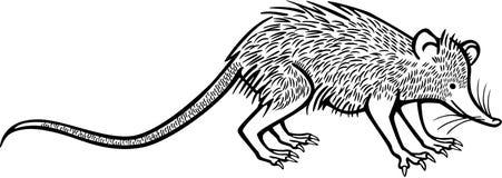 Solenodon ilustracja wektor