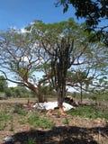 Solenoide de Sun del árbol de los cactus del cielo imagenes de archivo