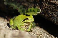 Solenoide prenent di Granota es immagini stock libere da diritti
