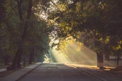 Solens strålar gör deras väg till och med träden, avverkning på vägen Arkivfoton