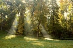 Solens strålar i höst parkerar Arkivfoton