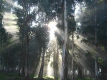 Solens strålar i soluppgången i dimman, i en mystisk skog arkivfoto