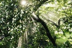 Solens strålar och regnskog royaltyfri bild