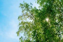 Solens strålar som bryter till och med sidorna av trädet royaltyfria bilder