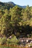 Solenzara-Fluss Lizenzfreie Stockfotografie