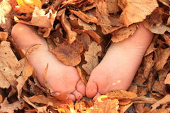 Soles of bare feet. Of a little girl hidden in dry leaves stock images