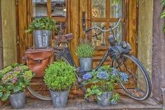 Solex-Ausstellung vor einem Fenster Stockfotos