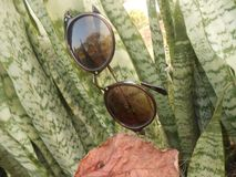 Solglasögon med naturlig bakgrund royaltyfria bilder