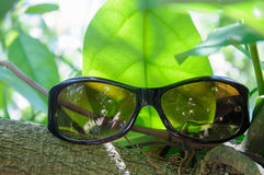 Solglasögon på en filial Royaltyfria Foton